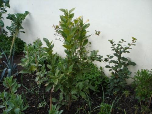 a minha hortinha